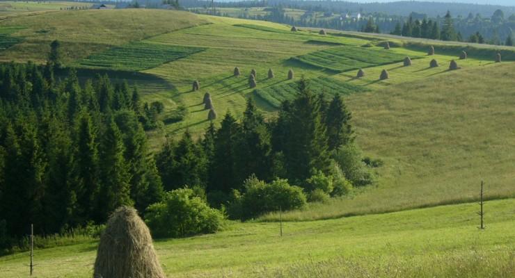 summer-carpathian